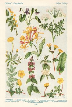 Vintage Antique 1930s Flowers botanical bookplate original lithograph art print illustration 4287