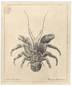 Mechanical Crustaceans With Clockwork Insides Illustrated By Steeven