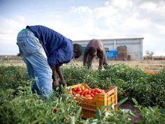 #FilieraSporca: di chi sono le mani che toccano il nostro cibo? L'indifferenza della Grande distribuzione - ControLaCrisi.org