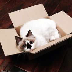 When he is not dressing up Albert enjoys a quiet life and especially loves sitting in card...