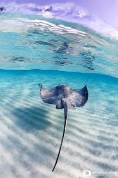 Swim with Sting Rays, they are by far one of my favorite creatures on this earth