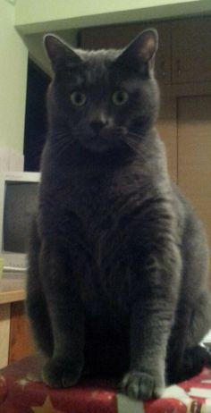 Post | PawSylvania Places To Visit, Cats, Animals, Gatos, Animales, Kitty Cats, Animaux, Animal, Cat