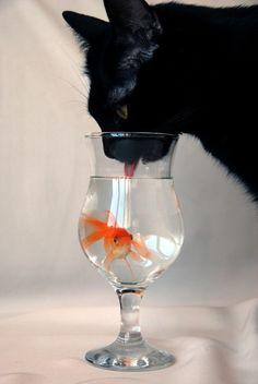 black cat & goldfish cocktail