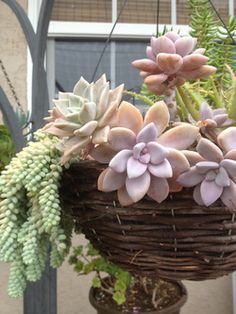Cacti & Succulents Care