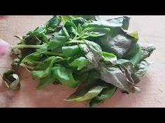 Evde Kendinden Fesleğen Yetiştirme. Kendinden Yetişebilen Bitkiler 5  Regrow Basil at home