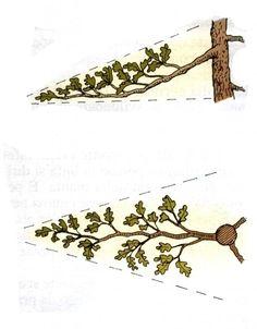 Bonsai Tree Care, Bonsai Tree Types, Indoor Bonsai Tree, Mini Bonsai, Bonsai Pruning, Bonsai Plants, Bonsai Garden, Grafting Plants, Moss Graffiti