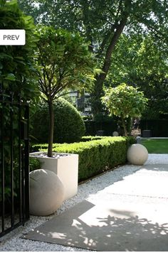 boxwood hedge cement sphere