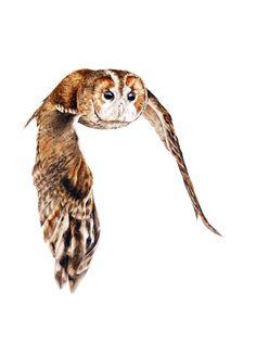 Tawny Owl Greetings card 4 x 6 inch botanical by BlueShedStudio