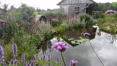 Mooie grote natuurlijke vijver met een bloemenzee eromheen. Alle vast planten bloeien er uitbundig alsof het een wilde bloemenweide is.