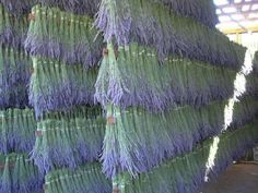 16 Best Mt  Shasta: Lavender Farm images in 2013 | California usa