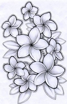 Drawing Of Hawaiian Flower Drawing Of Hawaiian Flower. Drawing Of Hawaiian Flower. Hawaiian Shirt Drawing Flower Necklace Tattoo Step by Pink in hawaiian flower drawing Drawing Of Hawaiian Flower Plumeria Drawing by Timchris with Images Tattoo Fleur, Hawaiianisches Tattoo, Leg Tattoos, Tattoo Drawings, Sleeve Tattoos, Symbol Tattoos, Tatoos, Necklace Tattoo, Shirt Drawing