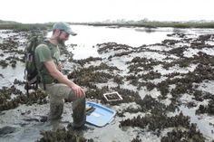 Saving oysters' future by digging up their paleo past - http://scienceblog.com/79960/saving-oysters-future-digging-paleo/