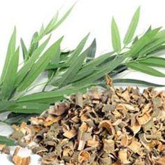 Ананасът, най-полезният плод за здравето, е бил открит от известния Христофор Колумб. Този красив и сладък плод е с родина Карибските острови, Хавай, Бразилия и други части на Южна Америка. Plants, Flora, Planters