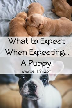 When we picked up Sadie, she was 9 weeks old and a total fluff ball. I had done research online as to how to care for a puppy and I can tell you now that I was not fully prepared. Here's what I learned that I hope will help you, should you opt to add a fur baby to your family.