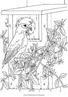 Dover Publications Creative Haven Beautiful Birds Coloring Book