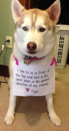 Dog Shaming, my sister's name is piper. Let me just say, her and this dog have sooo much in common. They would become best friends