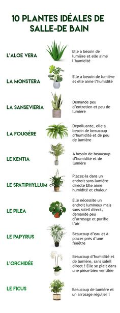 Inspirations for a bathroom ouaouh! Inspirations for a bathroom ouaouh! Garden Plants, Indoor Plants, Balcony Garden, Diy Jardim, Dream Garden, Home And Garden, Pinterest Inspiration, Plantas Indoor, Inside Garden
