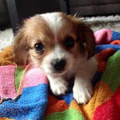 This is Maja 8 weeks old