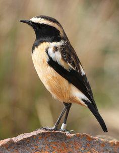 Oiseaux※Birds※Aves