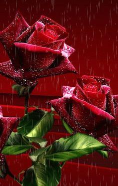 Rojo pasión, fulgor de melancolias fraternas...