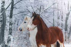 (97) Equine Photography - Żaneta Szmytka - Photos