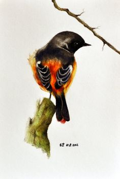 Bird on branch 3 - Original colored pencil