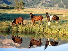 Caballos pastando en la orilla de un rio