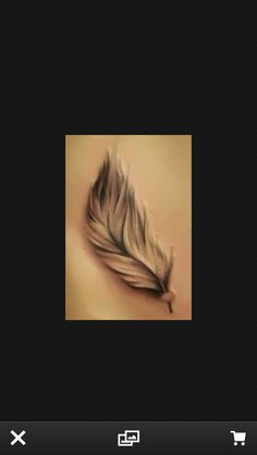 Black eagle feather