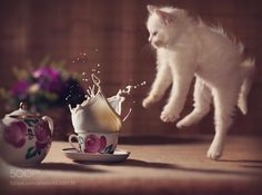500px ISO » Beautiful Photography, Incredible StoriesBest Photos of 2013: Cats - 500px ISO