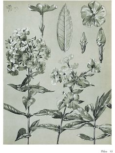 Artistic Plants and Flowers http://store.doverpublications.com/0486472515.html