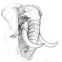 Elephants A Sunday Sketch. # Sketch # sketch # elephant # animals # # draw dr animals animal animal sketches A sketch Elephant Sunday Sketch draw Animals Pencil Sketch Drawing, Pencil Art Drawings, Art Drawings Sketches, Easy Drawings, Disney Drawings, Tattoo Drawings, Elephant Sketch, Elephant Art, Elephant Drawings