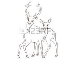 cerf dessin: livre de coloriage: Couple de daims isolé Illustration