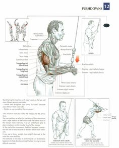 Free workouts, tips and exercise images for all other muscles on this page > BodyBuilding Tips & Tricks Bodybuilding Training, Bodybuilding Workouts, Muscle Fitness, Mens Fitness, Muscle Anatomy, Triceps Workout, Lower Abs, Fitness Nutrition, Strength Training