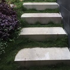 Delivered more no mow Zoysia tenuifolia Plant Tiles today and are delighted at how great the batches we delivered last year are looking! . . . . . . . #stairway #planttiles #entrance #zoysia #zoysiatenuifolia #steps #garden #gardening #gardenpath #gardendesign #gardenfeature #nomow #landscapedesign #brisbane #brisbanegardens