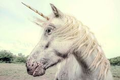 Unicorn, Photography, Wall art