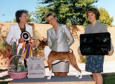 Basenji History - Picture - Ch. Zindika's Johnny Come Greatly, top Hound in 1997, pictured with handler Erin Roberts after winning the Basenji Club of America National Specialty in 1999 under judge Lauris Hunt of Australia. Photo Kitten Rodwell.