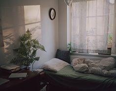 Large Fern at Johanna Wallin's Home via D Kesic