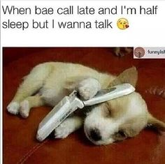18 Times Animals Had To Deal With Relationship Issues (Memes)