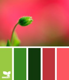 """This would make a great bargello palette, maybe the pomegranate pattern. """"budding palette"""" from Design Seeds. Colour Pallette, Color Palate, Colour Schemes, Color Combos, Color Patterns, Design Seeds, World Of Color, Color Of Life, Palette Verte"""