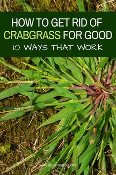 garden care tips Here a few methods useful for deterring crabgrass and making your yard inhospitable to this persistent weed. Garden Yard Ideas, Lawn And Garden, Garden Landscaping, Landscaping Ideas, Party Garden, Garden Art, Tire Garden, Garden Totems, Garden Drawing