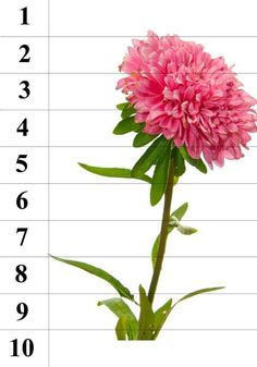 Montessori Kindergarten, Preschool Math, Hands On Activities, Activities For Kids, Primary Classroom, Flower Template, Sensory Bins, Fall Flowers, Education
