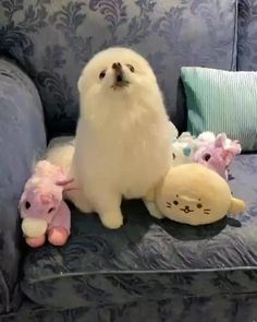 Cute Baby Dogs, Cute Funny Dogs, Cute Dogs And Puppies, Cute Funny Animals, Cute Animal Videos, Funny Animal Pictures, Cute Little Animals, Little Dogs, Photo Chat