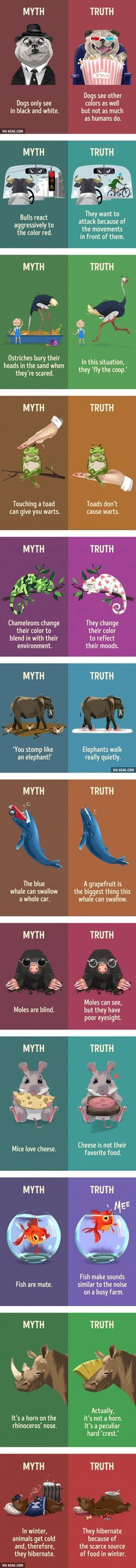 12 myths about animals that we still believe