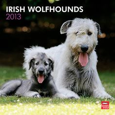 Irish Wolfhounds Wall Calendar: The shaggy-coated Irish Wolfhound has a peaceful, loving, and quiet personality. These very tall, very powerful dogs need plenty of space to maneuver.http://www.calendars.com/dbs/Irish-Wolfhounds-2013-Wall-Calendar/Irish-Wolfhounds-2013-Wall-Calendar/prod201300004487/?categoryId=cat10029=cat10029
