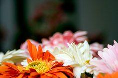 #flowers, #petals, #nature, #yellow,  #colors, #daisies, #orange