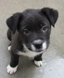 Lab/husky mix up for adoption in Pontiac, MI so cute!: Labrador Retriever, Husky Labrador Mix, Animal 3333, Doggies, Labrador Husky Mix, Cute Animals, Blue Eyes, Beautiful Dogs