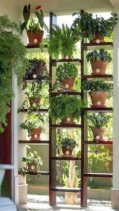 This wpuld be super cool in a florida room! Or as a room divider #plantasdeinterior