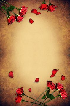 Flowery Wallpaper, Framed Wallpaper, Cool Wallpaper, Iphone Wallpaper, Red Roses Background, Flower Background Wallpaper, Flower Backgrounds, Flower Frame, Flower Boxes