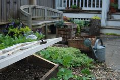 Cold frame from old door or window. lovely outdoor space.