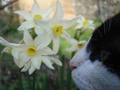 blog di Sara: Vieni nel mio giardino...voglio che i miei fiori t...